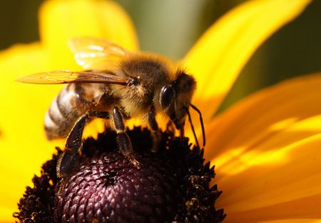Close-up of a bee sitting on a yellow flower
