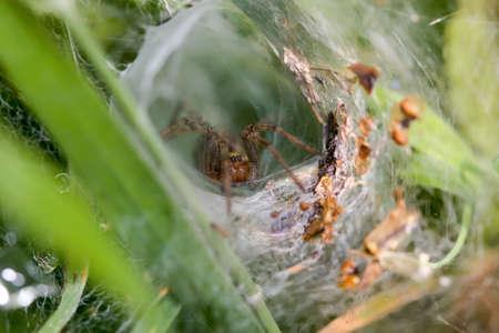 arachnidae: Labrynth Spider Stock Photo