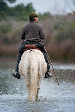 Camargue Horse and rider Standard-Bild