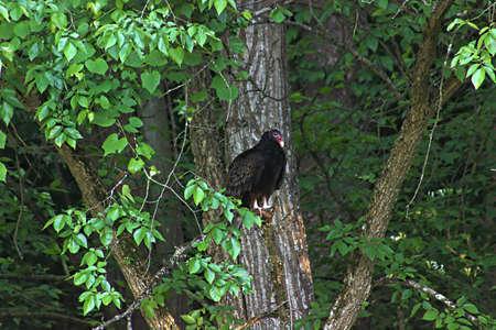 Bird of Prey 版權商用圖片