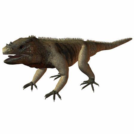 Iguana Standard-Bild - 610463