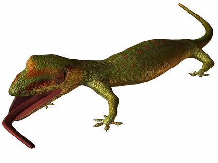 Gecko Standard-Bild - 844960