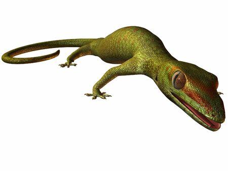 Gecko  Standard-Bild - 844958