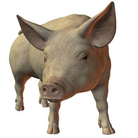 grunt: Pig