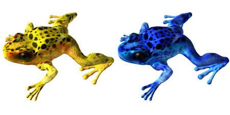 poison dart: Poison Dart Frog