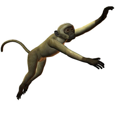 Monkey Stock Photo - 1312313