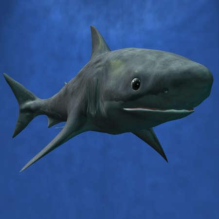 Great White Shark Stock Photo - 1638925