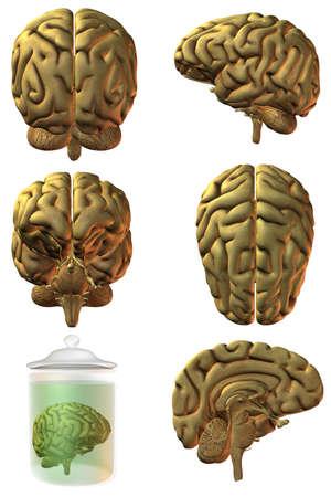 brainy: 3D Human Brain