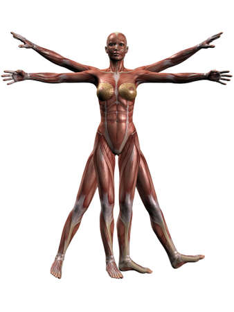 Female Human Body Anatomy Stock Photo