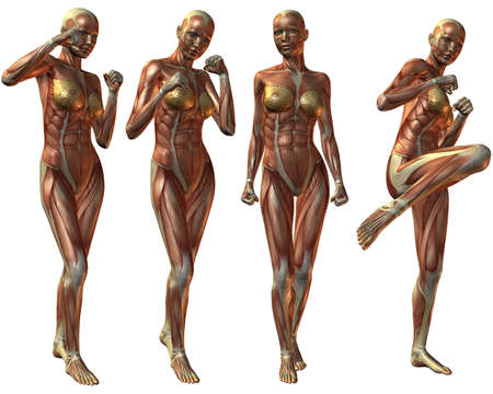 muscle arm: Female Human Body Anatomy Stock Photo