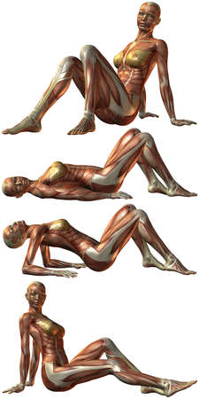 muscular men: Female Human Body Anatomy Stock Photo