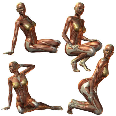 Female Human Body Anatomy Stock Photo - 3821527