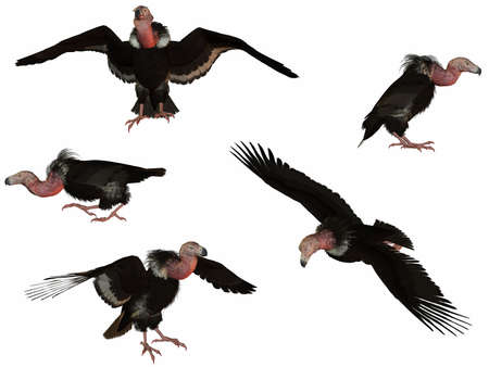 biggest animal: 3D Render of an Vulture