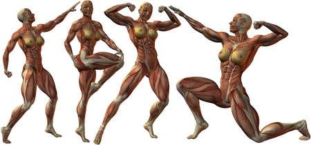 Female Bodybuilder Menselijke anatomie Stockfoto