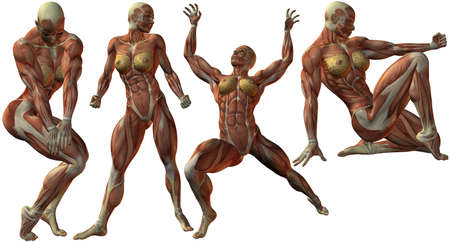 female bodybuilder: Female Human Bodybuilder Anatomy Stock Photo