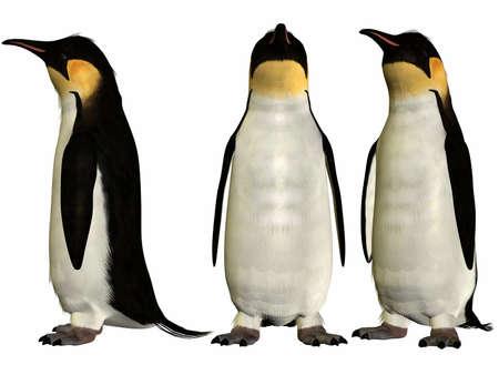 emperor: Emperor Penguin