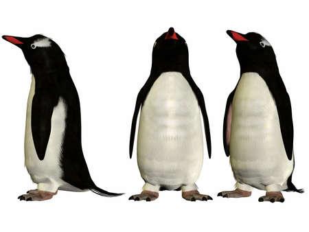 gentoo: Gentoo Penguin Archivio Fotografico