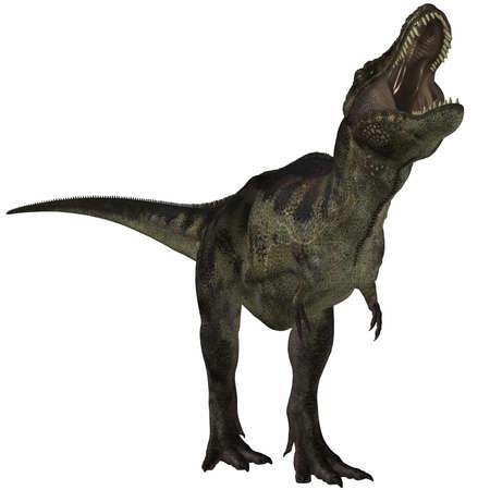 chordata: Tyrannosaurus - 3D Dinosaur