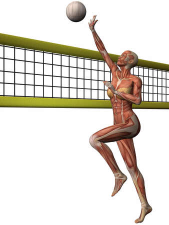 homo: Female Anatomic Body - Volleyball
