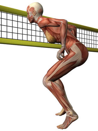female volleyball: Female Anatomic Body - Volleyball