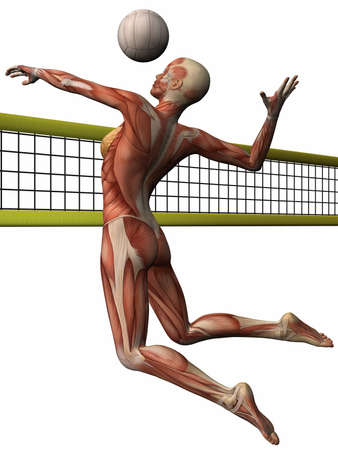 Female Anatomic Body - Volleyball