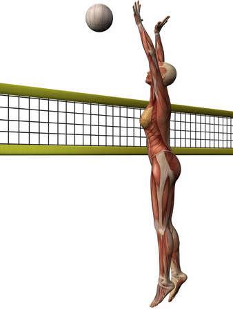 Female Anatomic Body - Volleyball Stock Photo - 3984033