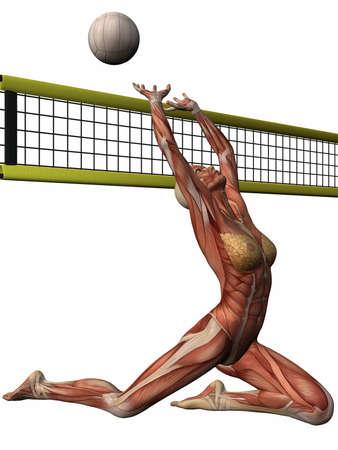 Female Anatomic Body - Volleyball