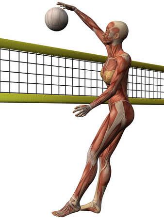 Female Anatomic Body - Volleyball Stock Photo - 3984038