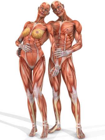 남성과 여성 Anatomic Body - Couple 스톡 콘텐츠