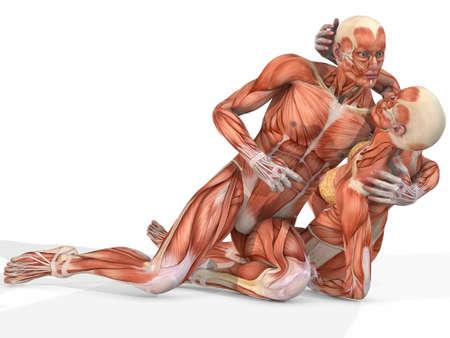 Vrouwelijke en mannelijke Anatomic Body - Couple Stockfoto