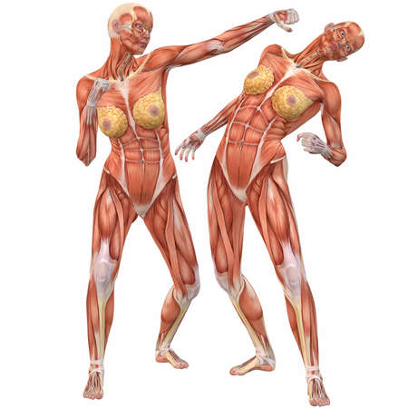 girl fight: Female Human Body Anatomy-Street Fight