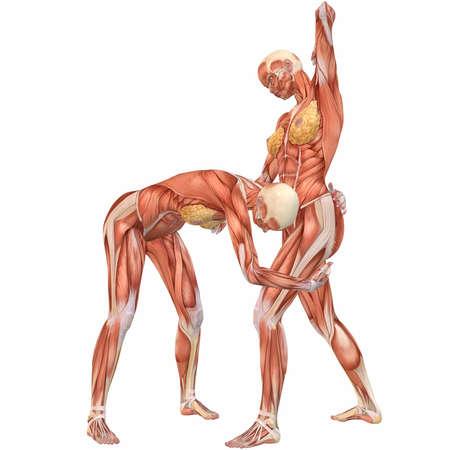 Female Human Body Anatomy-Street Fight Stock Photo - 4096095