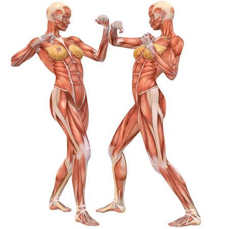 kungfu: Female Human Body Anatomy-Street Fight