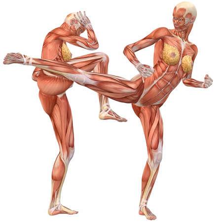 ścięgno: Kobieta Human Body anatomia-Street Fight Zdjęcie Seryjne