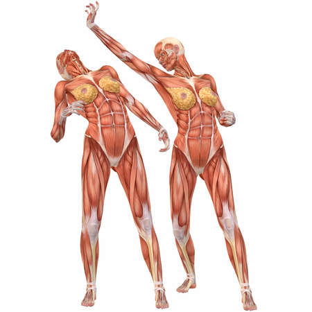 Female Human Body Anatomy-Street Fight Stock Photo - 4115599