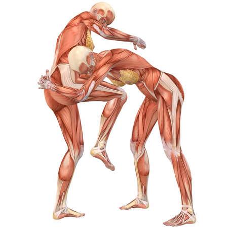 Female Human Body Anatomy-Street Fight Stock Photo - 4115598