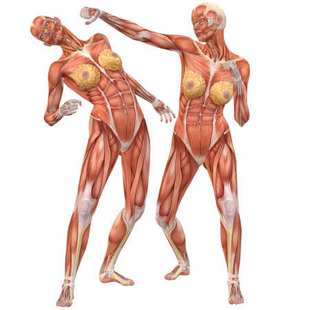 martial arts woman: Female Human Body Anatomy-Street Fight