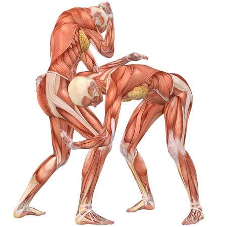 Female Human Body Anatomy-Street Fight Stock Photo - 4115596
