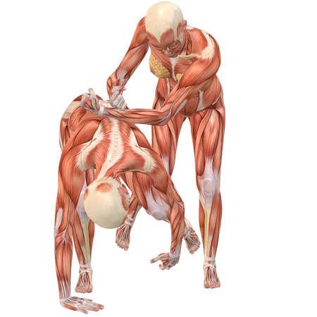 Female Human Body Anatomy-Street Fight photo