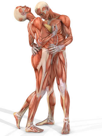 homo: Female And Male Anatomic Body - Couple
