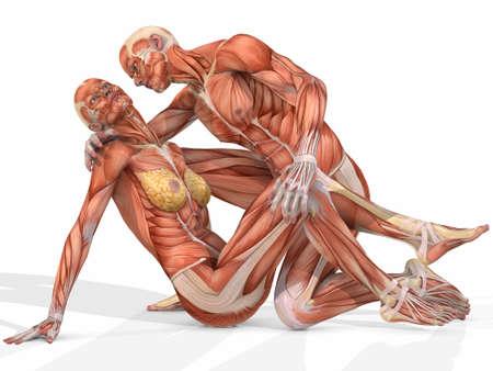 남성과 여성 Anatomic Body - Couple 스톡 콘텐츠 - 4140341