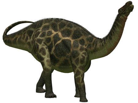 chordata: Dicraeosaurus - 3D Dinosaur