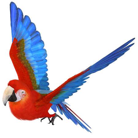 amazon forest: Macaw