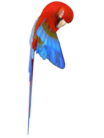 Macaw Stock Photo - 4604890