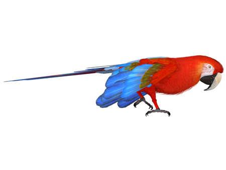 Macaw Stock Photo - 4604888