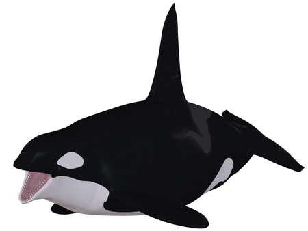 orcinus: Orca - Killer Whale