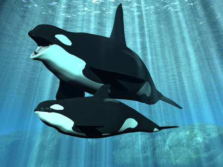 Orca - Killer Whale With Calf photo