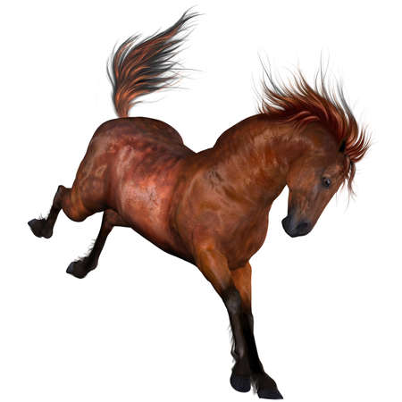 Beautiful Horse Stockfoto