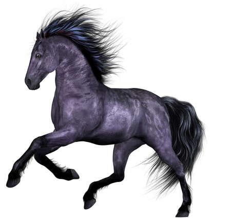 pony tail: Beautiful Horse Stock Photo