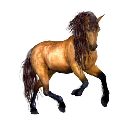 poser: Beautiful Horse Stock Photo